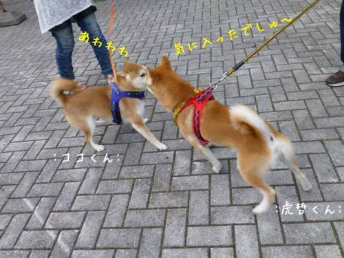 P1030585+AZUKI.jpg