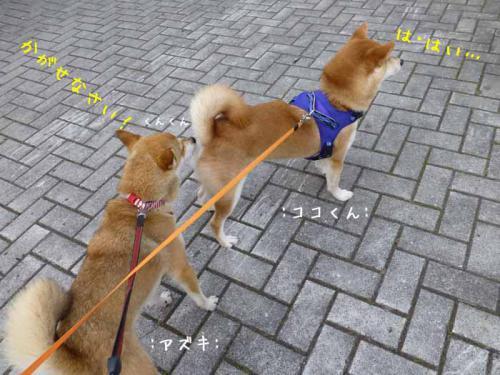P1030595+AZUKI.jpg