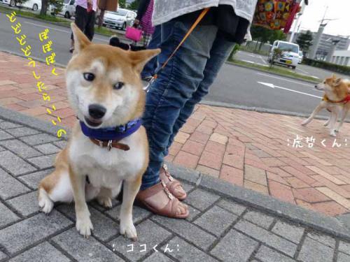 P1030606+AZUKI.jpg