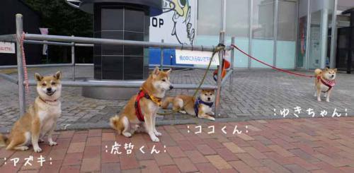 P1030619+AZUKI.jpg