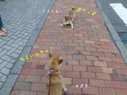 P1030692+AZUKI.jpg