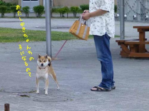 P1030713+AZUKI.jpg
