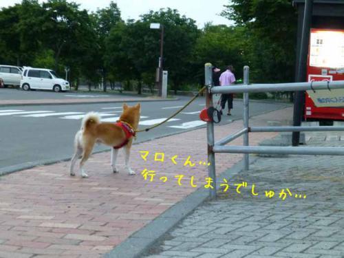 P1030723+AZUKI.jpg