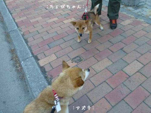 P1030727+AZUKI.jpg
