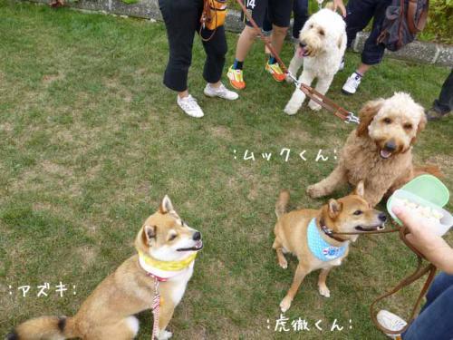 P1030827+AZUKI.jpg