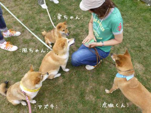 P1030841+AZUKI.jpg