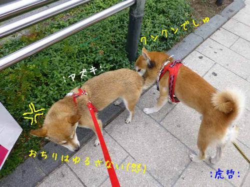 P1040136+AZUKI.jpg