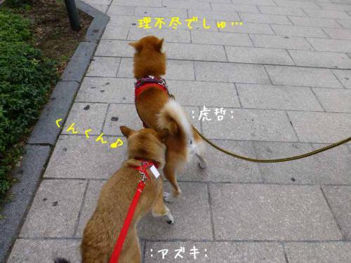 P1040138+AZUKI.jpg