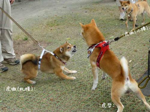 P1040148+AZUKI.jpg