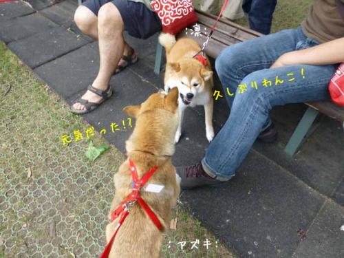 P1040171+AZUKI.jpg