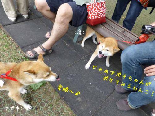 P1040179+AZUKI.jpg