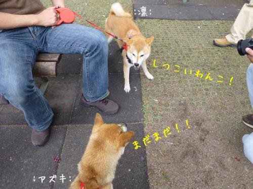 P1040196+AZUKI.jpg