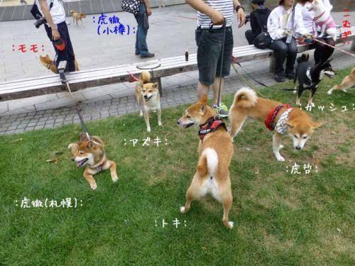 P1040263+AZUKI.jpg