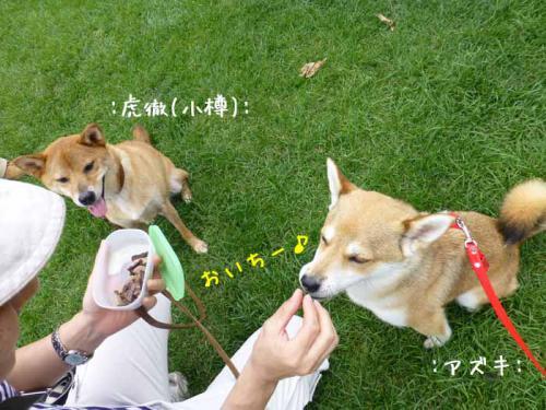 P1040272+AZUKI.jpg
