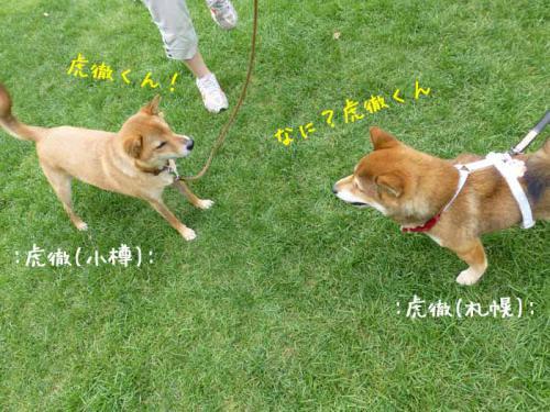 P1040277+AZUKI.jpg