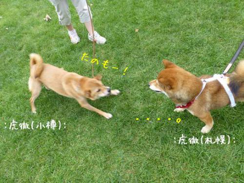 P1040278+AZUKI.jpg