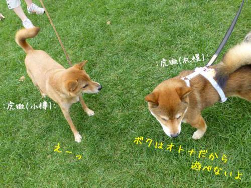 P1040279+AZUKI.jpg
