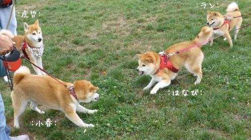 P1040373+AZUKI.jpg