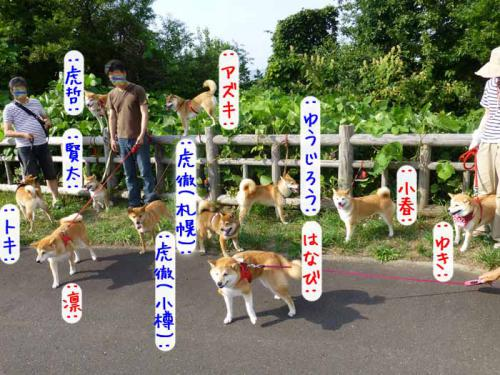 P1040476+AZUKI.jpg