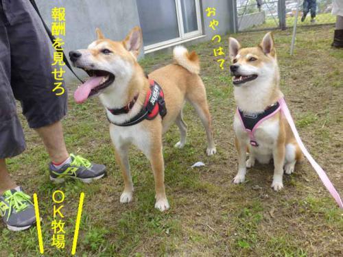 P1050112+AZUKI.jpg