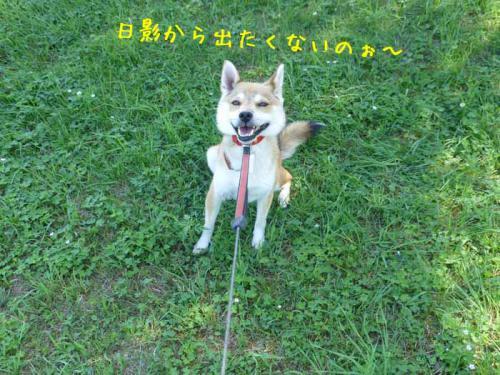 P1050352+AZUKI.jpg