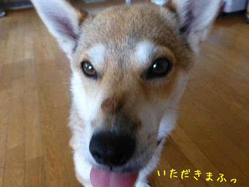 P1050363+AZUKI.jpg