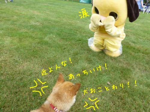 P1050411+AZUKI.jpg