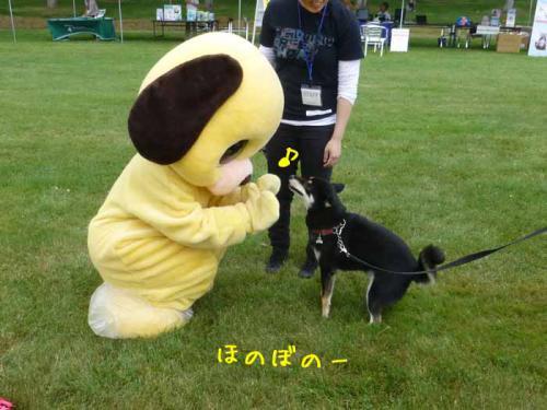 P1050416+AZUKI.jpg