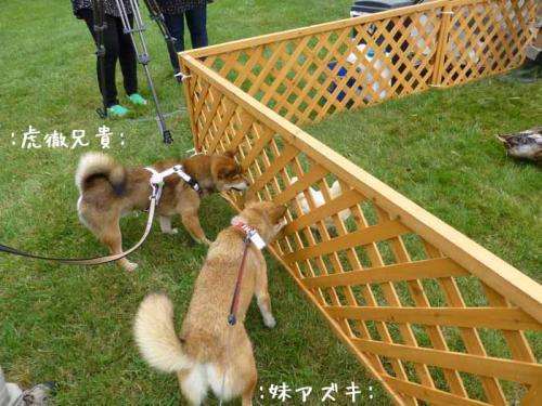 P1050423+AZUKI.jpg