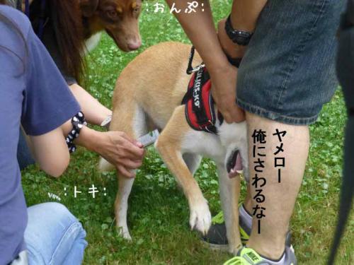 P1050456+AZUKI.jpg