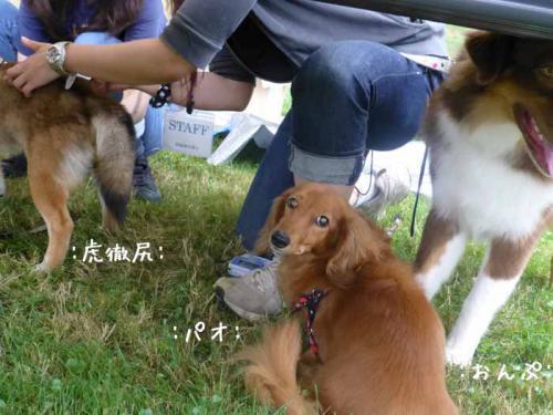 P1050467+AZUKI.jpg