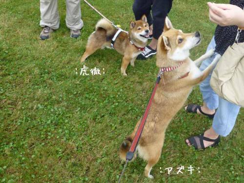 P1050483+AZUKI.jpg