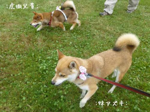 P1050516+AZUKI.jpg