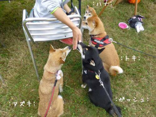P1050532+AZUKI.jpg