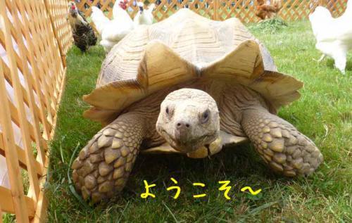 P1050602+AZUKI.jpg