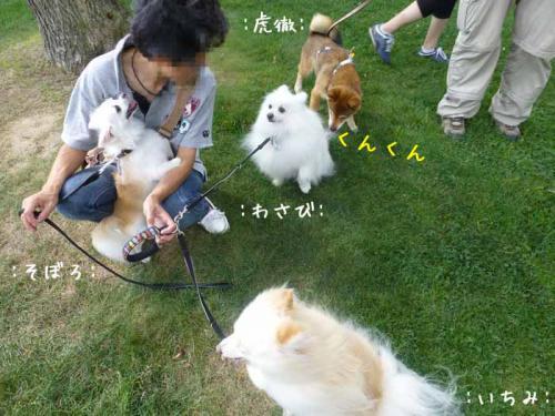 P1050606+AZUKI.jpg