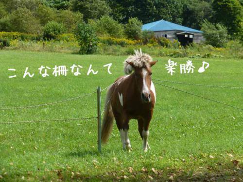 P1050789+AZUKI.jpg