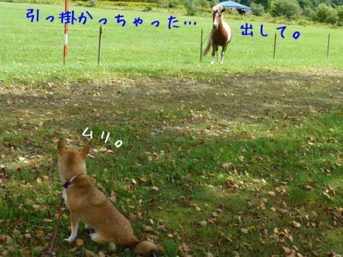 P1050791+AZUKI.jpg