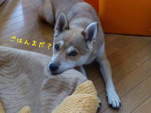 P1050818+AZUKI.jpg
