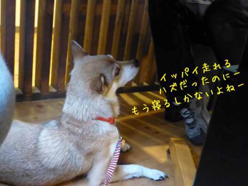 P1050889+AZUKI.jpg
