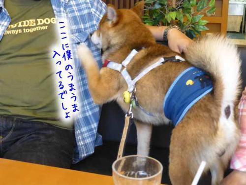 P1050907+AZUKI.jpg