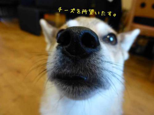 P1050911+AZUKI.jpg