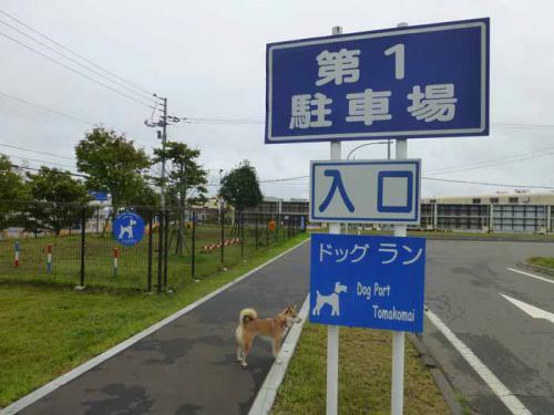 P1050960+AZUKI.jpg