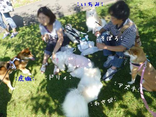 P1060470+AZUKI.jpg