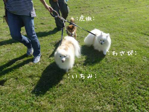 P1060472+AZUKI.jpg