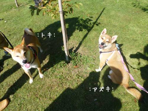 P1060477+AZUKI.jpg