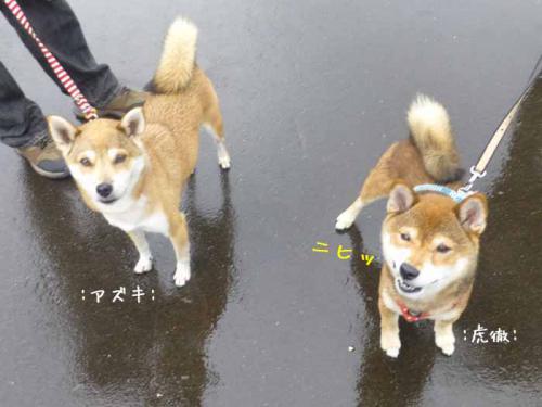 P1060707+AZUKI.jpg