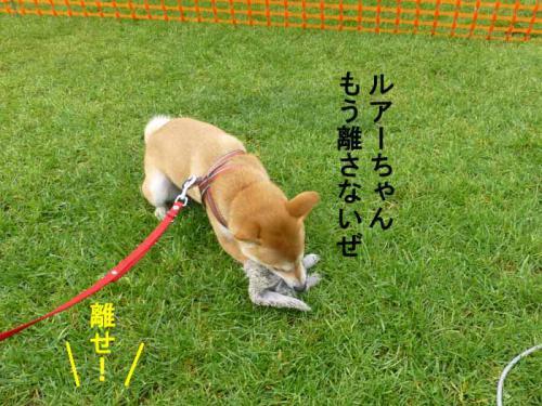 P1070216+AZUKI.jpg