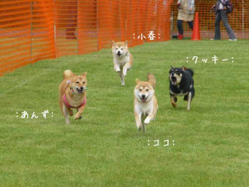 P1070230+AZUKI.jpg