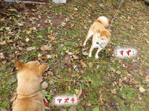 P1080132+AZUKI.jpg